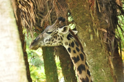 Wild Africa Trek 145