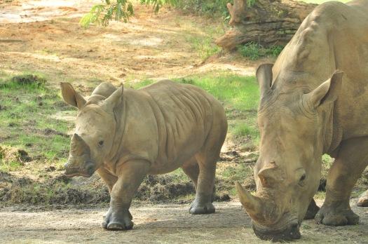 Wild Africa Trek 178