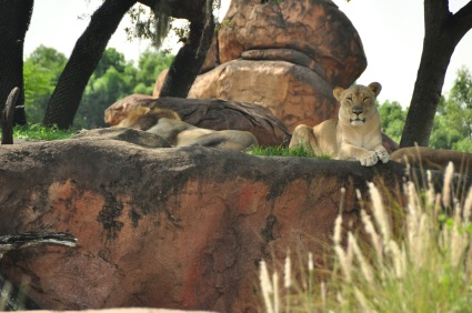 Wild Africa Trek 185