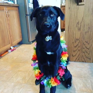 Puppy Moana wearing a Lei